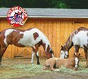 Odor Control For Horses