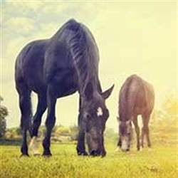 HorseGirl eNews